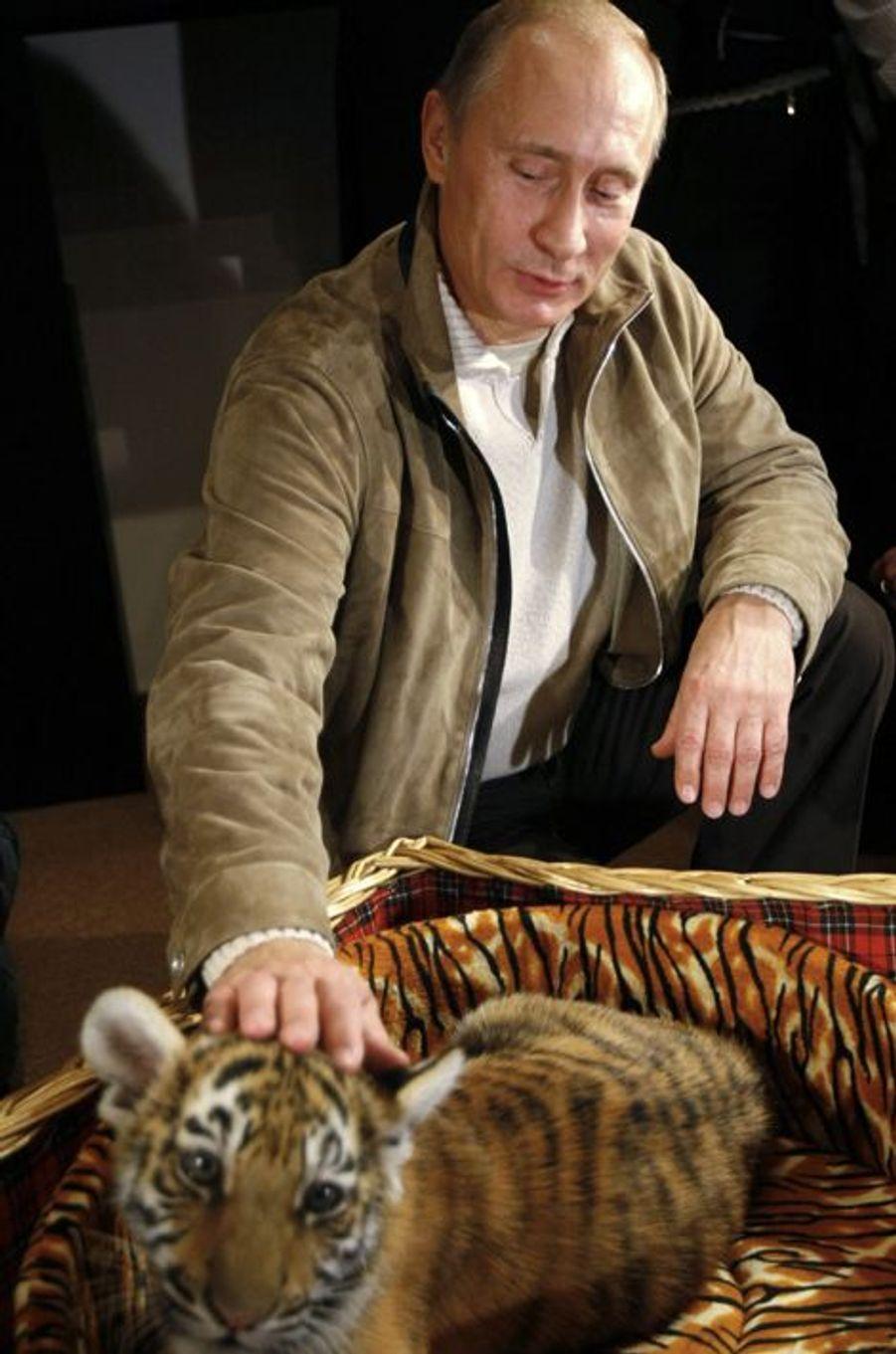 Vladimir Poutine caresse le tigre reçu pour son 58ème anniversaire, en octobre 2010