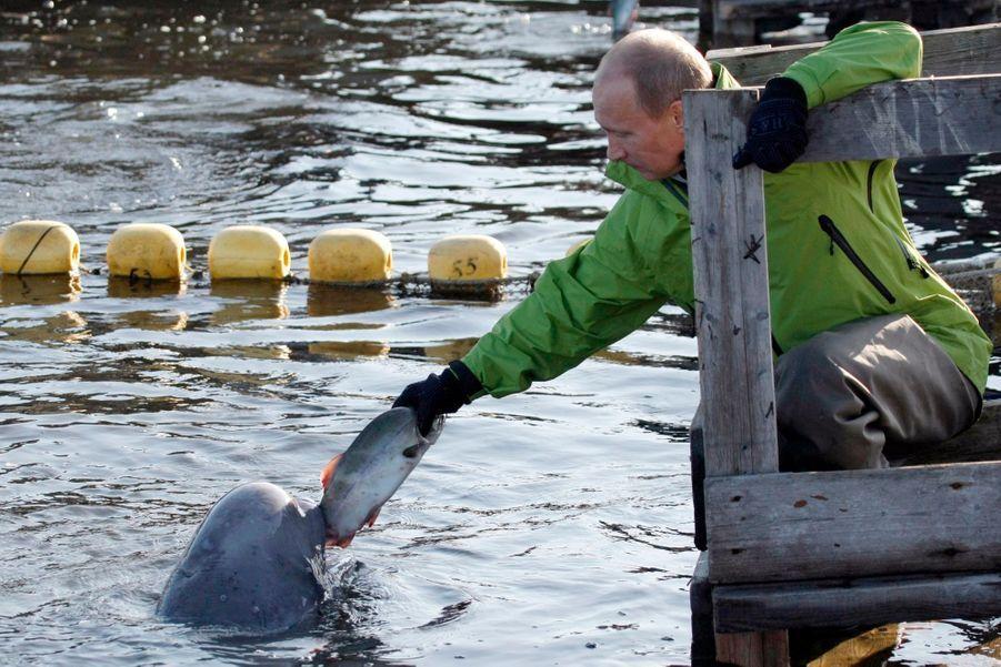 Vladimir Poutine nourrit un beluga en Sibérie, en août 2009
