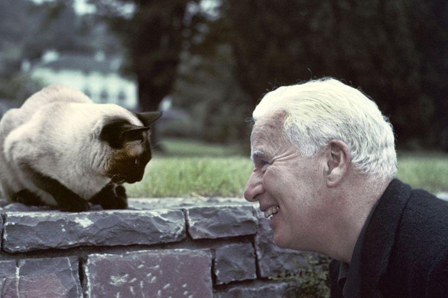 1955. Charlie Chaplin en tête à tête avec son chat chez lui dans sa propriété à Vevey en Suisse. En 1952 Chaplin se rendit avec sa famille à Londres. Pour la promotion de son nouveau film «Les feux de la rampe» la commission anti-comuniste dirigée par le sénateur Joseph McCarty en profita pour interdire à Chaplin de revenir sur le sol Américain en lui supprimant son visa. La famille Chaplin trouva terre d'asile en Suisse en 1953 et s'installa dans une grande propriété à Corsier au-dessus de Vevey.