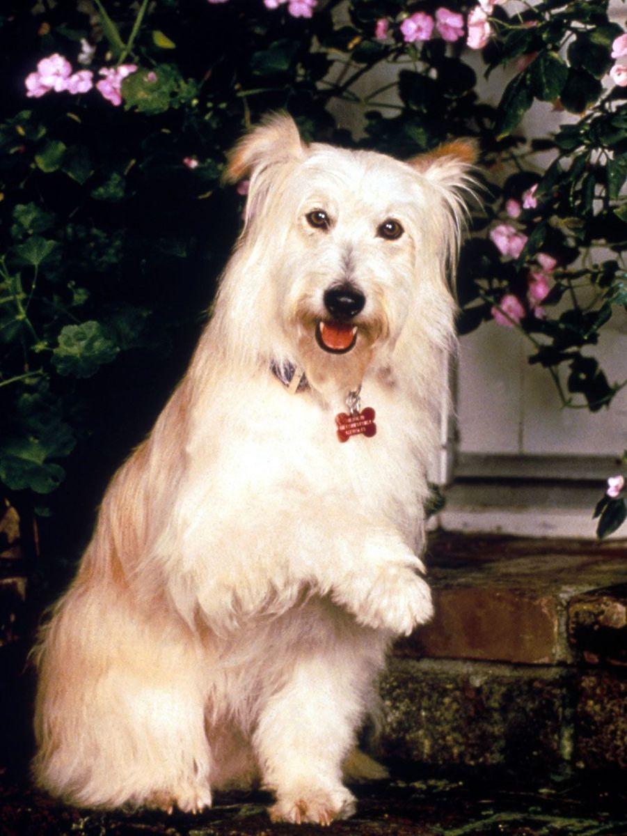 Le chien bien aimé des Camden est mort en 2010 après un beau succès à la télévision.