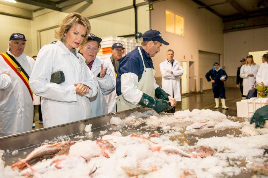 La reine Mathilde de Belgique dans les bancs de poissons de la minque de Zeebrugge, le 9 novembre 2016