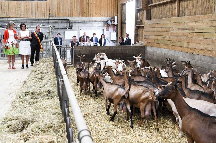 La reine des Belges Mathilde dans une ferme à Bovesse, le 13 juin 2017
