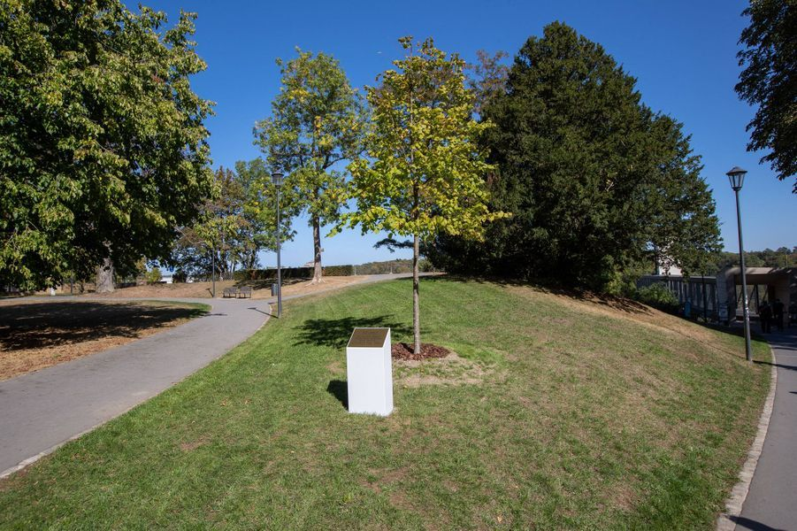 L'arbre et la plaque en l'honneur du prince Charles de Luxembourg au parc Fondation Pescatore à Luxembourg, le 21 septembre 2020