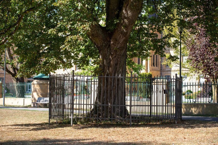 L'arbre en l'honneur du grand-duc Jean de Luxembourg au parc Fondation Pescatore à Luxembourg, le 21 septembre 2020