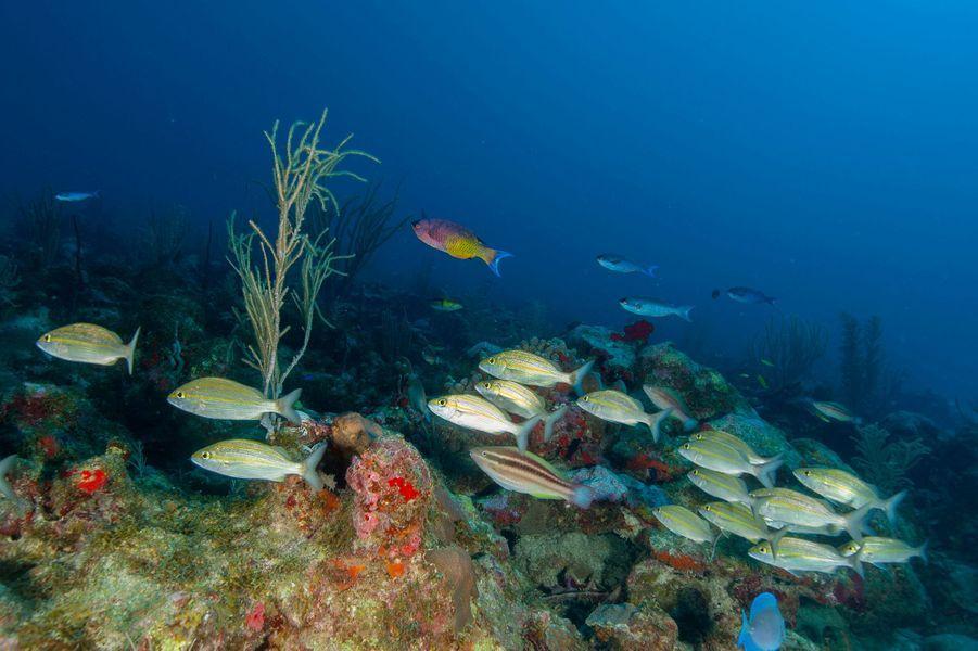 Les fonds marins qu'ont découverts en plongeant la reine Maxima et le roi Willem-Alexander des Pays-Bas à Saba, le 1er décembre 2017