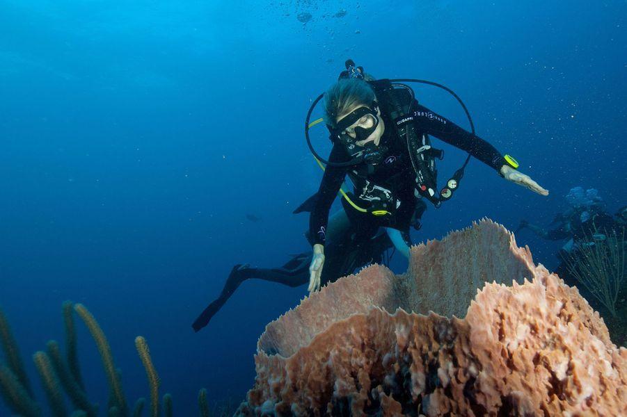 La reine Maxima des Pays-Bas plonge dans la mer des Caraïbes lors de sa visite sur l'île de Saba, le 1er décembre 2017