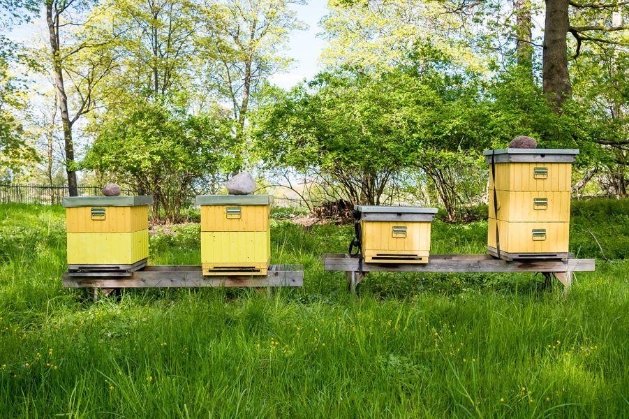 Les ruches dans le parc de Haga à Solna, le 18 mai 2020