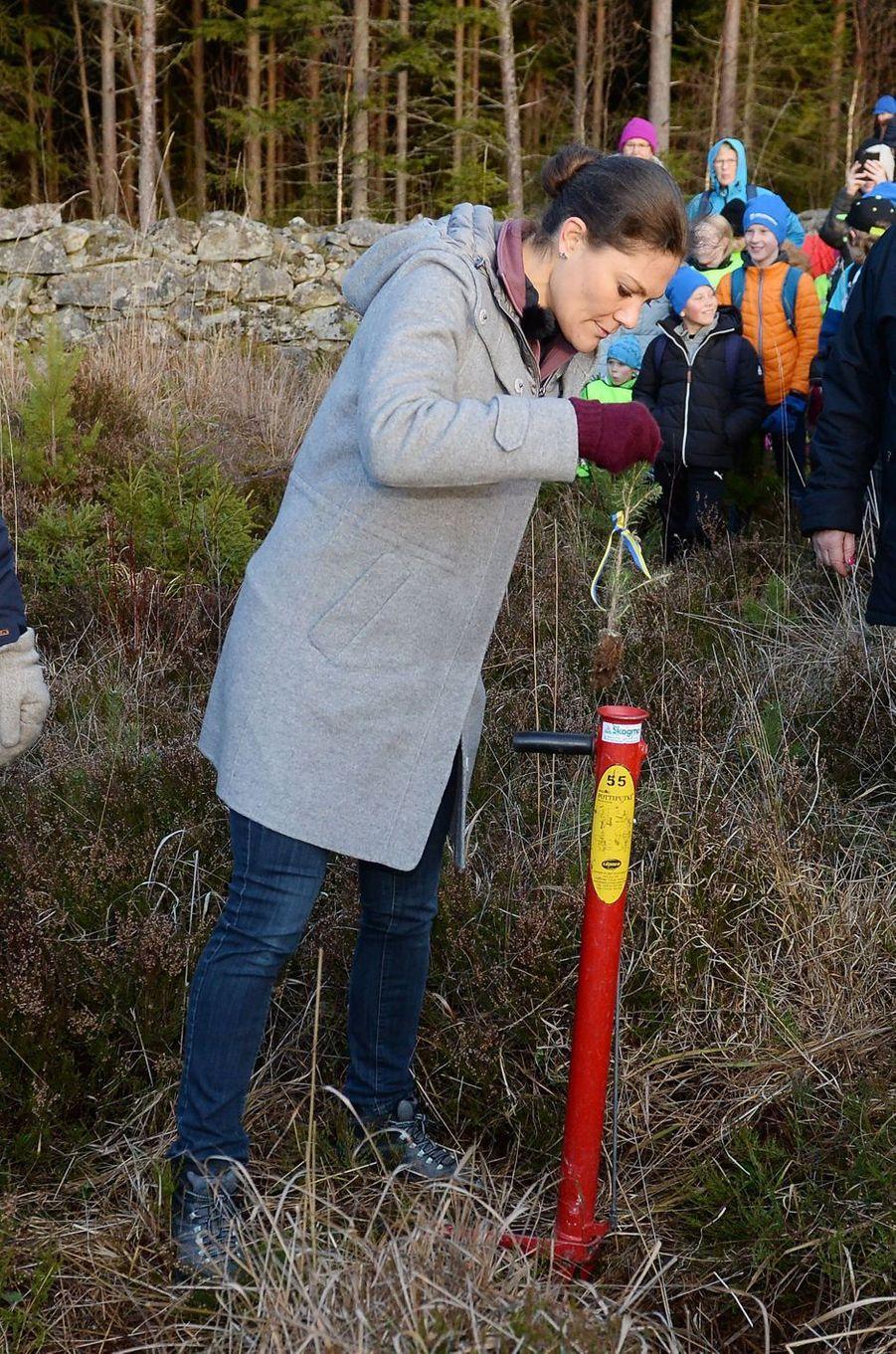 La princesse Victoria de Suède plante un arbre dans la réserve naturelle de Glaskogen, le 17 novembre 2017