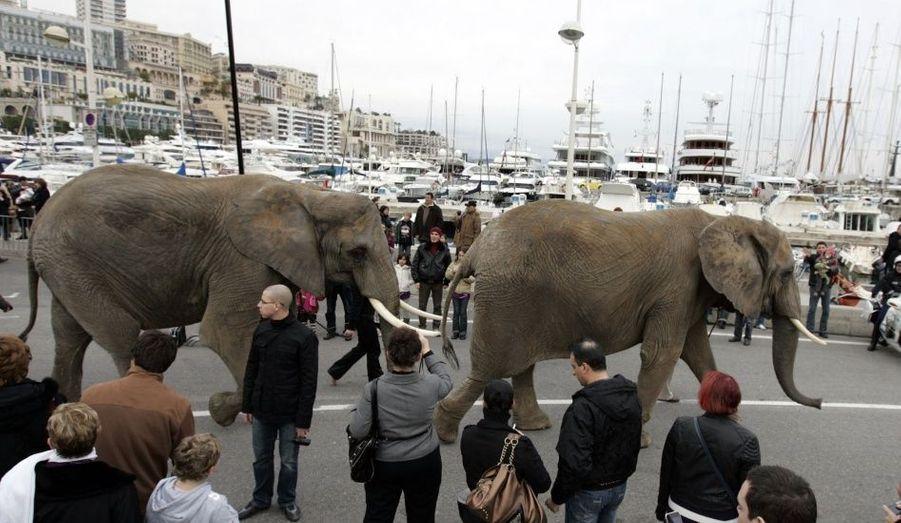Image insolite: d'énormes pachidermes ont eu l'honneur d'effectuer une petite promenade sur le port de Monaco.
