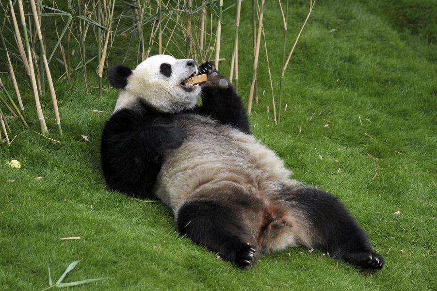 Le roi et le panda reçoivent le président chinois