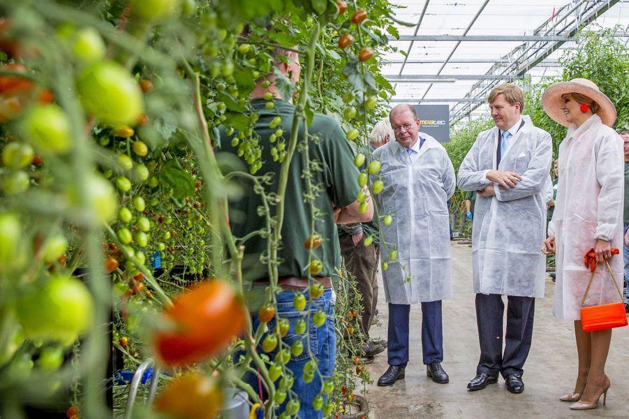 La reine Maxima des Pays-Bas a passé ce lundi 13 juin en Frise, avec son royal époux. L'occasion de visiter, entre autres, une pépinière de tomates.