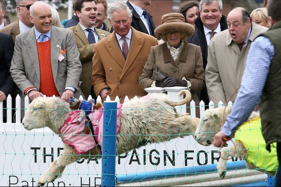Charles et Camilla sont férus de chevaux. Mais ce ne sont pas leurs amis de la gente équine que le prince et son épouse ont regardé sauter des obstacles dimanche 29 mars à Ascot, mais... des moutons.