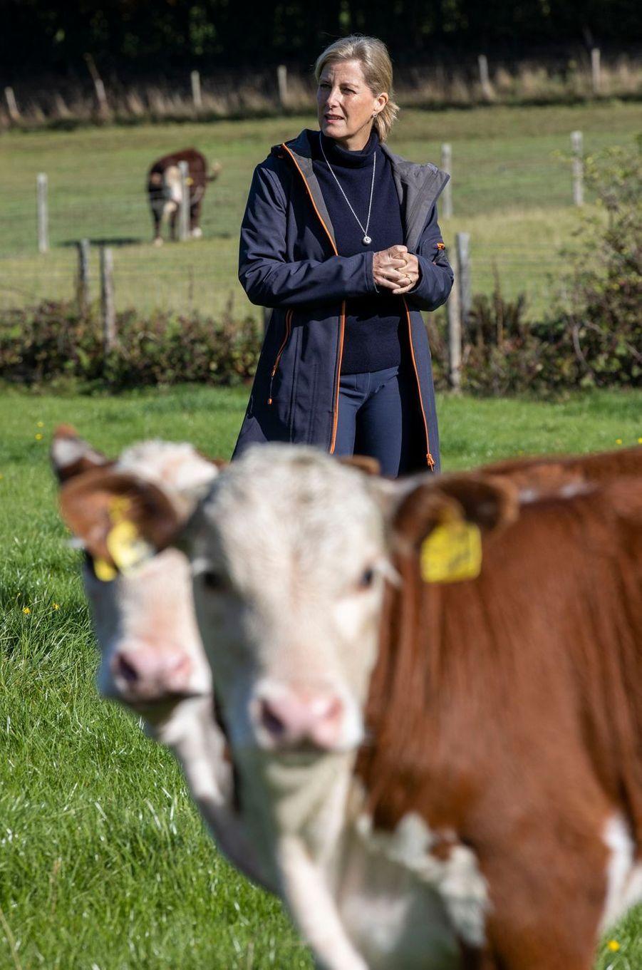 La duchesse Sophie de Wessex à Cranleigh, le 24 septembre 2020