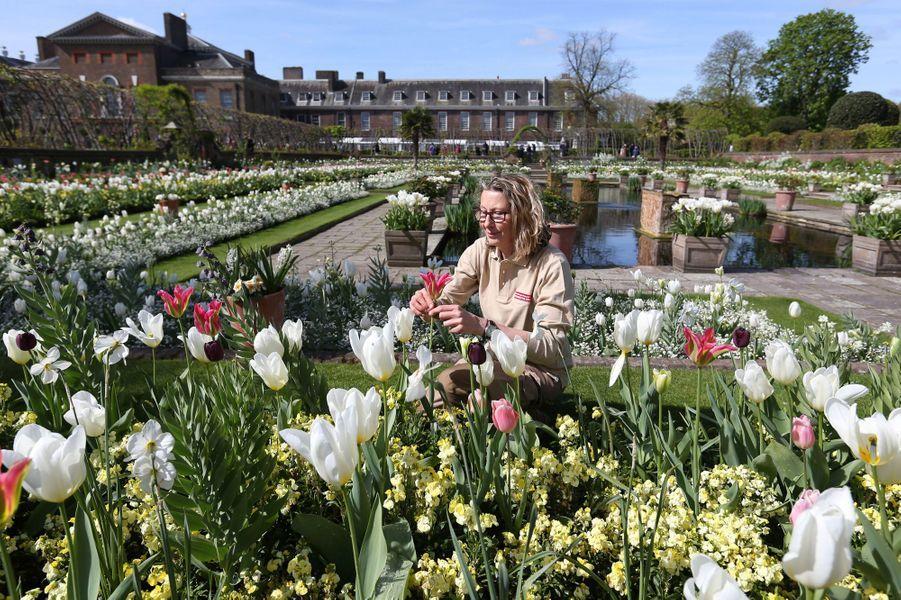 Le Jardin blanc en mémoire de Lady Diana à Kensington Palace à Londres a ouvert le 13 avril 2017