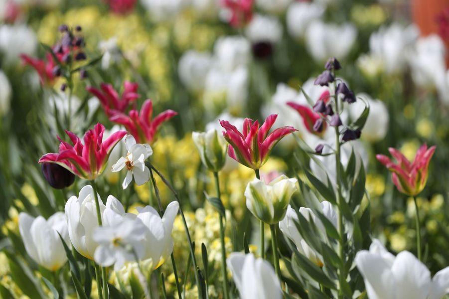 Quelques fleurs roses, jaunes et violettes s'invitent dans le Jardin blanc de Lady Diana à Londres, en avril 2017