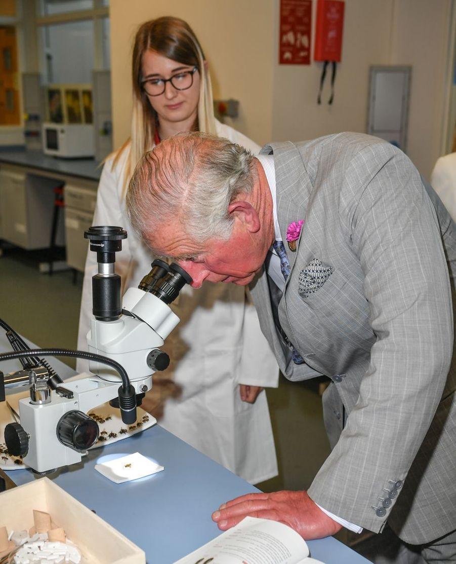 Le prince Charles à Llanarthne, le 3 juillet 2019