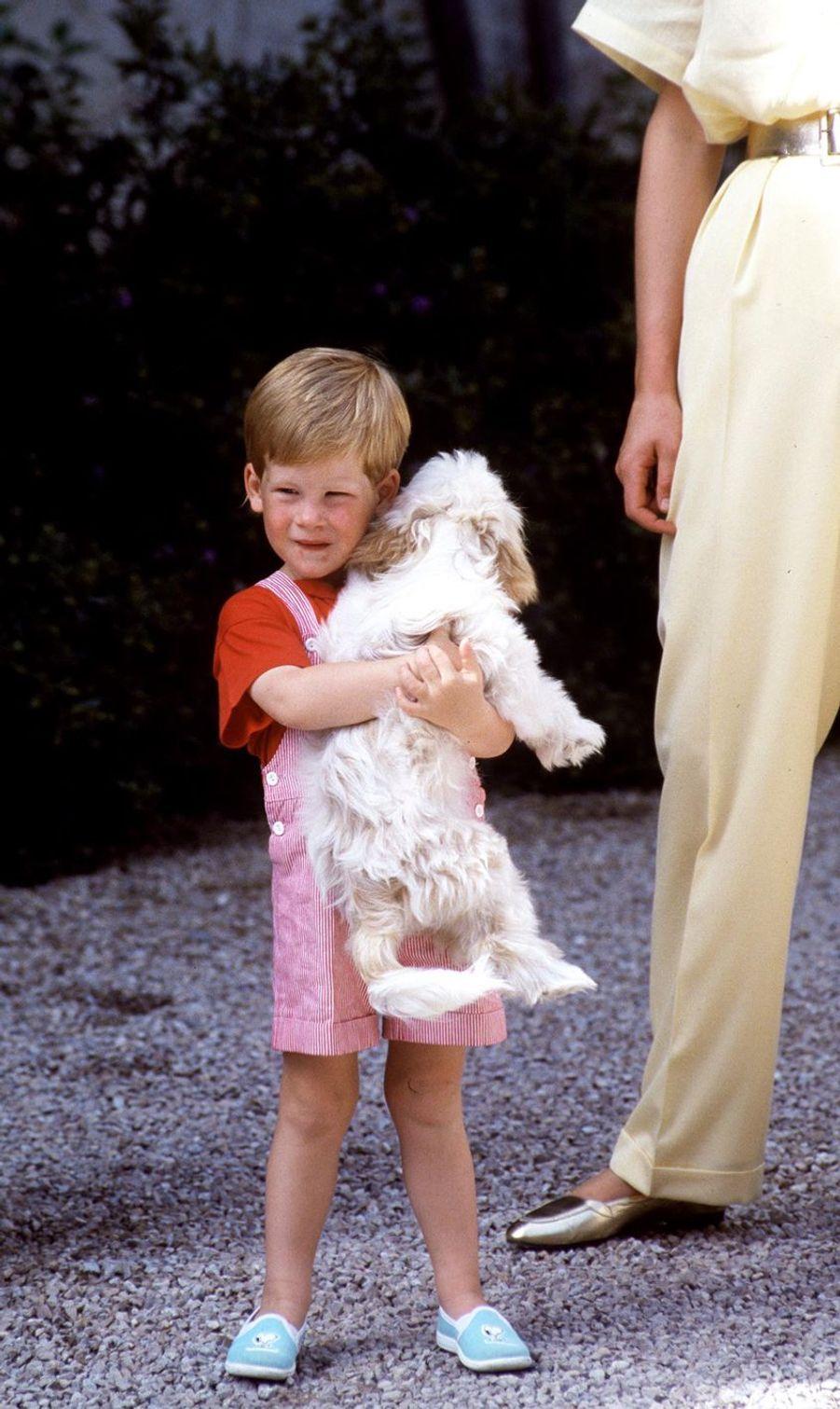 Le prince Harry jouant avec un chien lors d'un séjour à Majorque, Espagne, en août 1987
