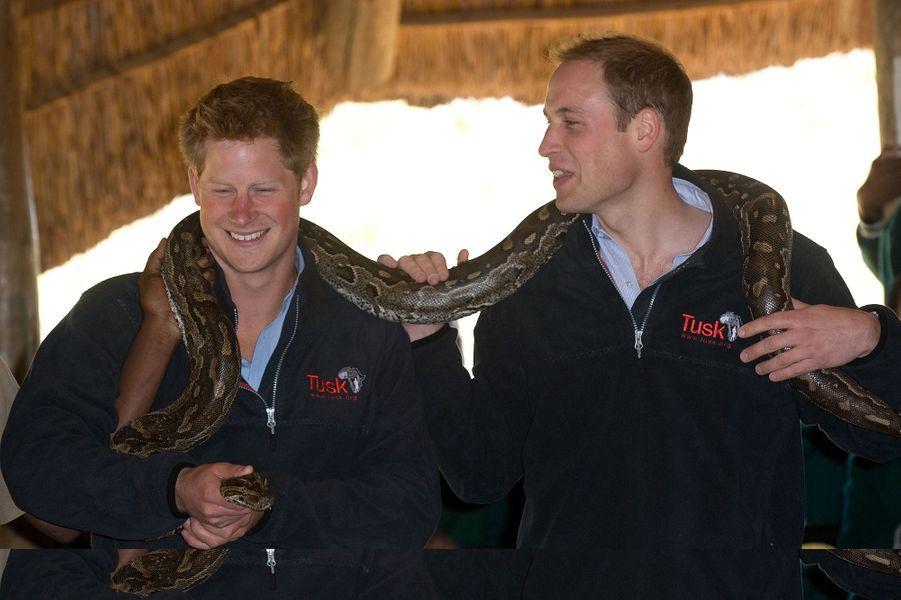 Le prince Harry et le prince William en voyage au Botswana en juin 2010