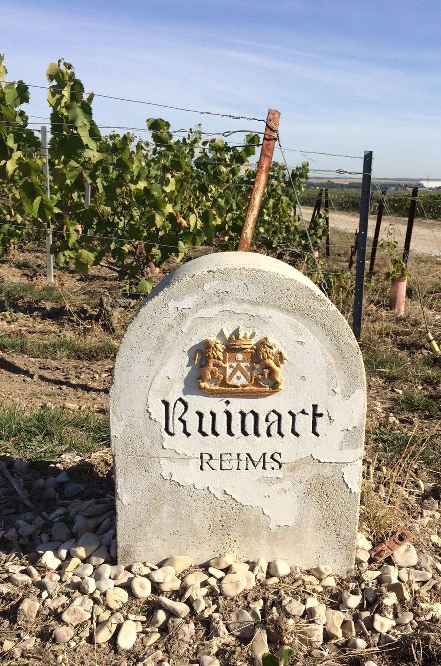 A Reims, quête du Graal chez Ruinart