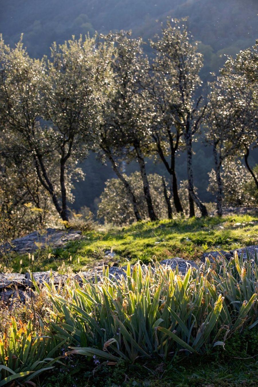 Le monastère a été construit sur un antique site druidique au cœur du parc national des Cévennes.