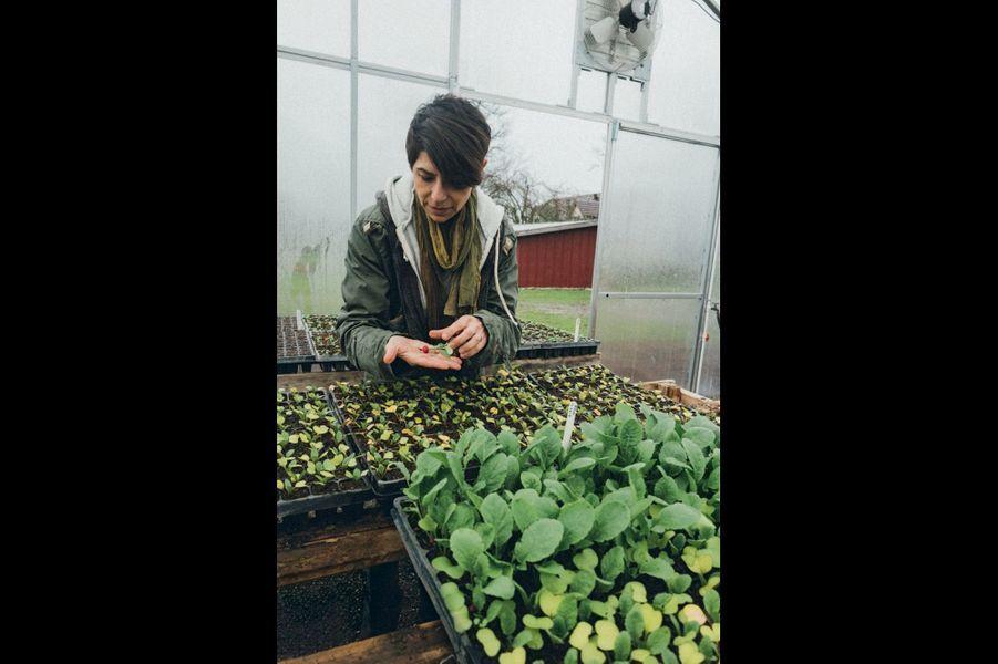 Dans la serre, un semis de radis à la main. Ici, ni engrais ni pesticides.