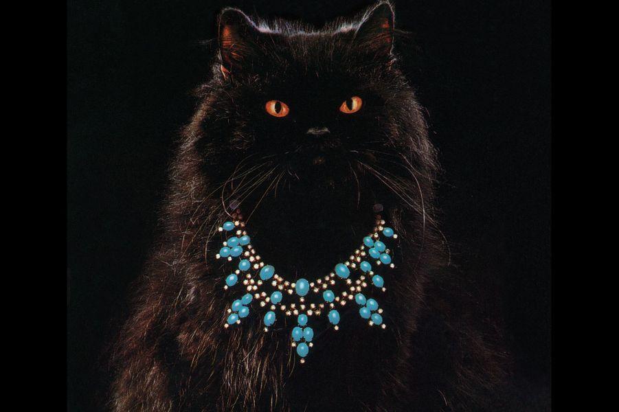 Sa Majesté le chat Dans les années 1980, Alain Boucheron, dont les aïeux fondèrent la maison du même nom en 1858, eut l'idée de faire porter ses créations à un chat prénommé Wladimir. Paré de bijoux de haute joaillerie, ce persan devint l'animal fétiche du magasin de la place Vendôme.