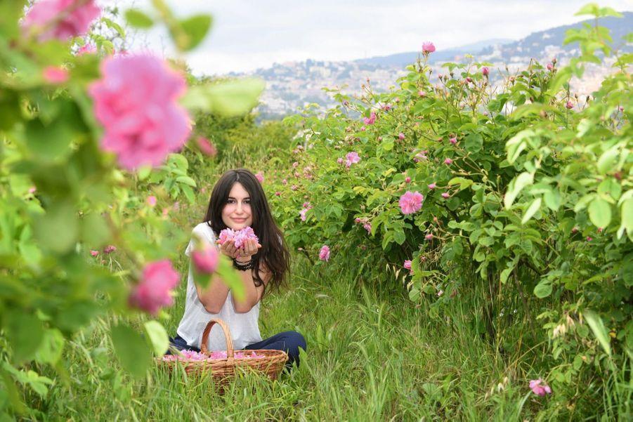 Fanny, une Grassoise dans un champ de rose Centifolia avec la ville de Grasse en arrière-plan.