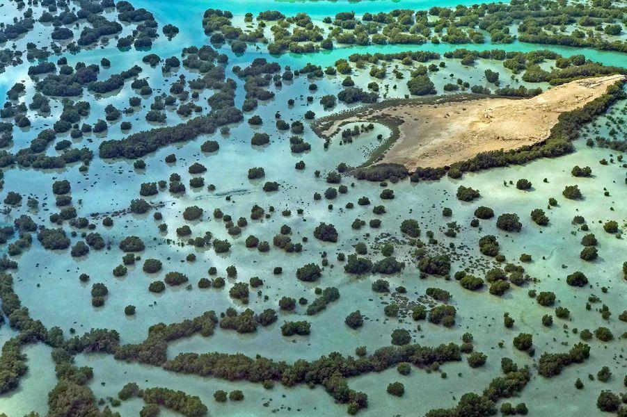 De superbes mangroves
