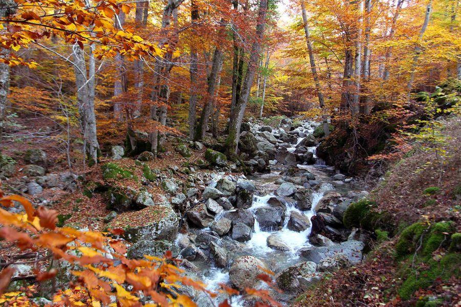 Dans la forêt de Vizzavona (Corse).
