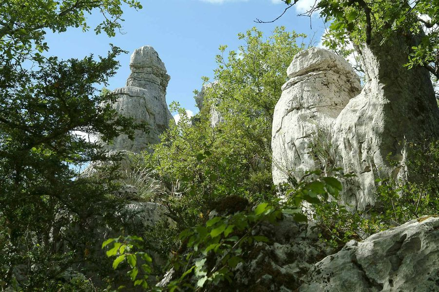 Dans le bois de Païolive (Ardèche).