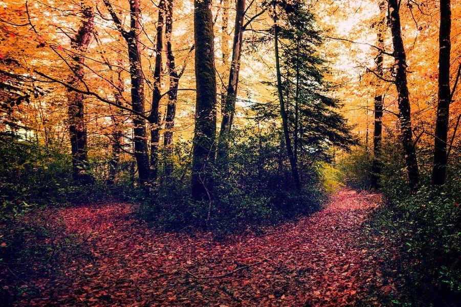 En forêt de Brocéliande (Ille-et-Vilaine).