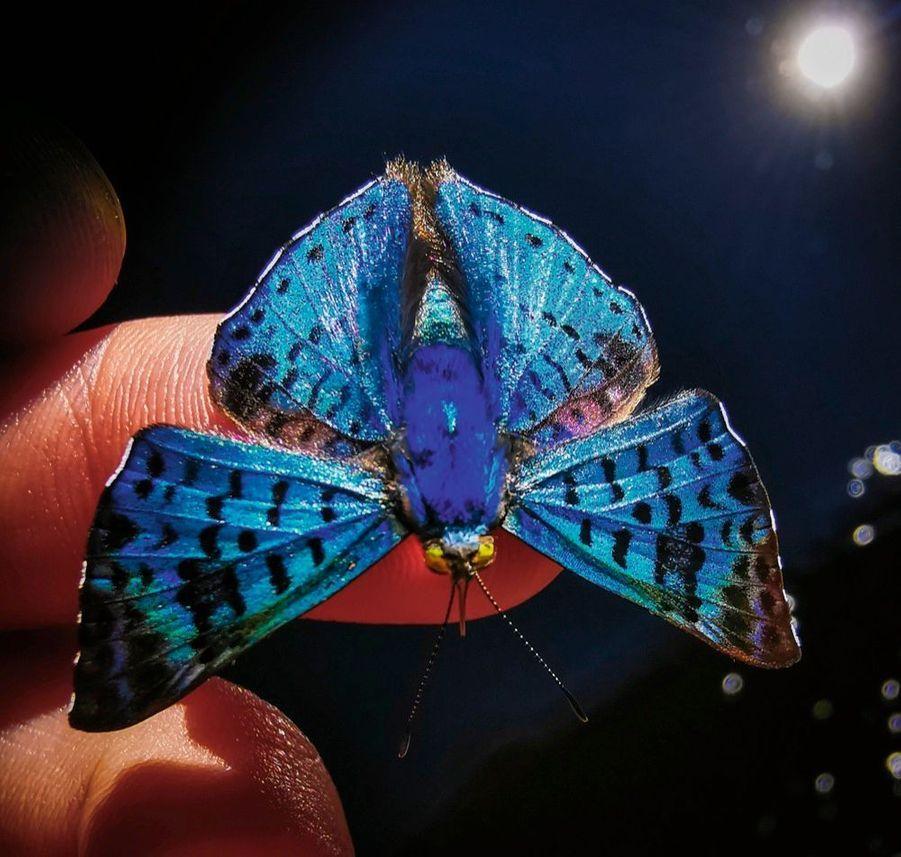 Un papillon nocturne.