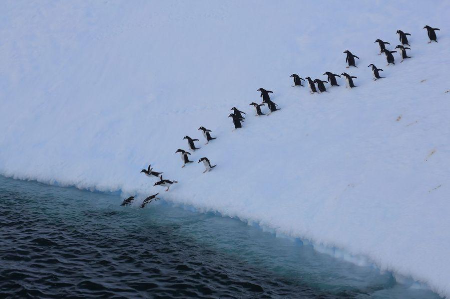 Il est temps de reprendre la pêche. Valse-hésitation avant de plonger, car dans l'eau rôdent les prédateurs...