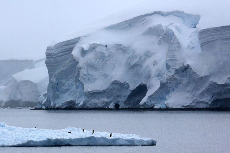 Un glaçon plat, c'est bien pratique pour offrir une petite sieste aux manchots . Et tant pis si, au loin, un gros glacier semble sur le point de les avaler.