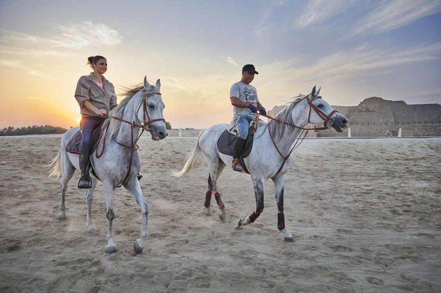 Bahrain Fort Horses