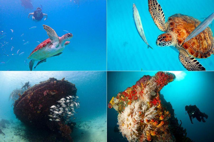 Les tortues que l'on peut voir à Carlisle Bay, à La Barbade.