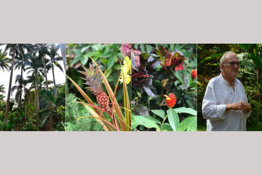 Dans les jardins d'Anthony Hunte, à La Barbade.