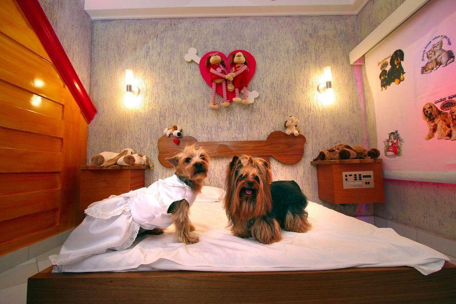 Hôtels de glace, cellules de prisonnier ou hôtels-capsules: l'imagination humaine est sans limite. Voici notre sélection des établissements les plus insolites de l'hôtel pour chiens de Rio de Janeiro à celui nouvellement ouvert à Bonn qui reproduit un camping américain.