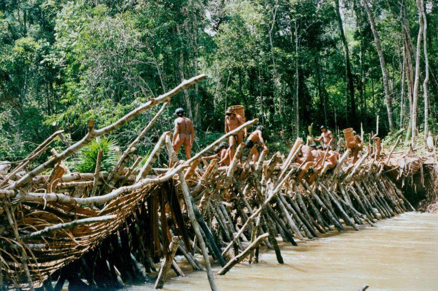 Lors de la saison des pluies, lorsque les collines de la Serra de Norte sont recouvertes de nuages, le plus long rituel indien d'Amazonie commence. Le rituel du Yãkwa maintient l'harmonie du monde. Cette cérémonie dure quatre mois, durant lesquels ont lieu des échanges de nourriture entre les Enawene Nawe et les yakaitiri, maîtres du poisson et du sel. Au début du Yãkwa, les Enawene Nawe construisent des waitiwina, (barrages) à travers l'adowina (le rio Preto). Les barrages sont édifiés à l'aide de branchages entrelacés formant un treillage dans lequel sont insérés des dizaines de pièges coniques. Écorces et plantes grimpantes assurent l'assemblage.