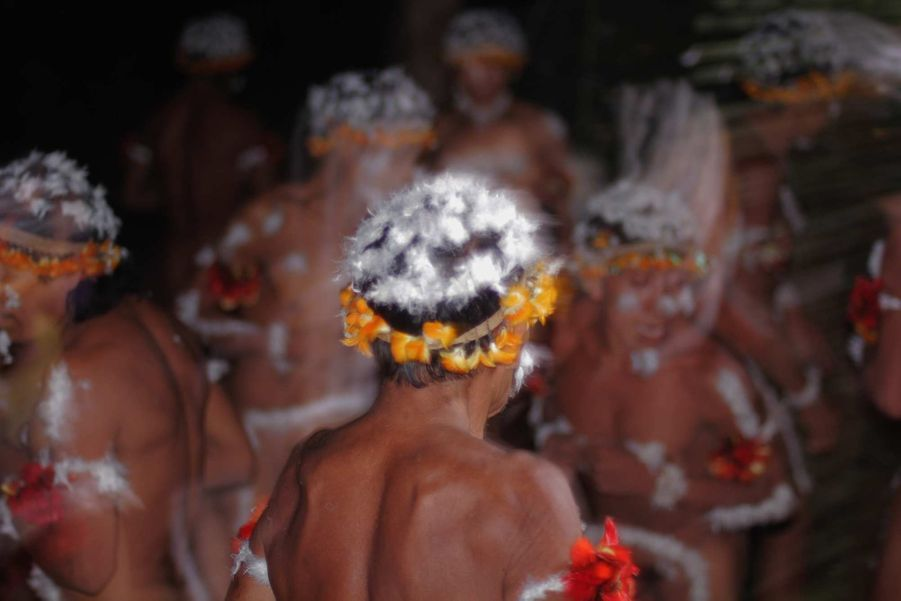Pour entreprendre le voyage vers les esprits de la forêt, les femmes awá ornent le corps de leurs époux de plumes du vautour royal à l'aide de résine. Mais leurs arbres se meurent: les forêts des Awá disparaissent plus rapidement que tout autre territoire indigène d'Amazonie brésilienne. Plus de 30% de l'un des territoires awá a été rasé pendant ces quatre dernières décennies pour faire place aux fermes d'élevage. Au cours de ce processus, les Awá ont été témoins du massacre de leurs communautés aux mains des karai, ou non-Indiens.