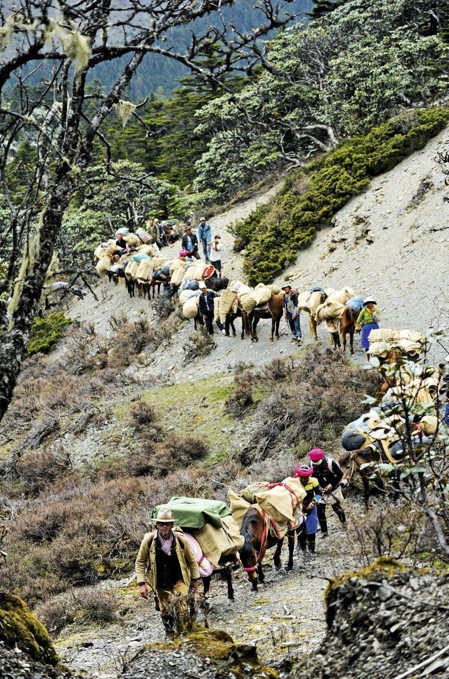 Constantin à la tête du cortège avec les caravaniers tibétains transportant parfois jusqu'à 2tonnes de matériel, nécessaires à l'édification du campement au milieu de la nature.