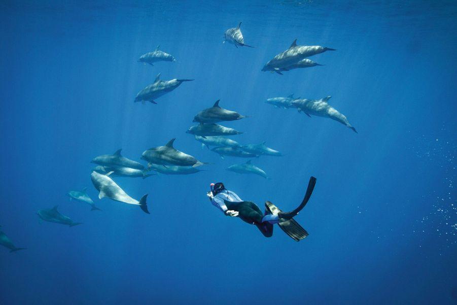 Les dauphins au large de Saint-Gilles.
