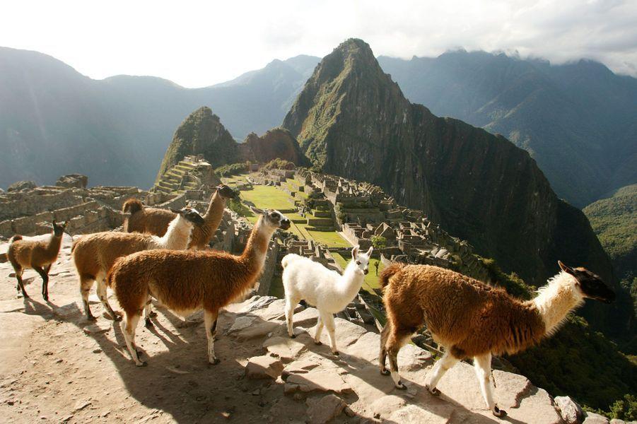 Le Machu Picchu et ses lamas