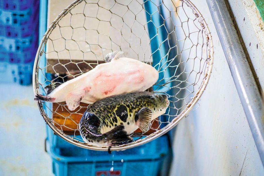 1. Le poisson doit être découpé vivant. Pour cela, les chefs utilisent un couteau spécial, le fugu hiki.