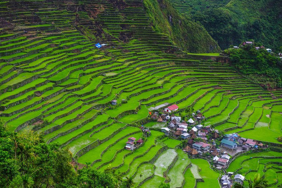 Les rizières de Banaue, Philippines.