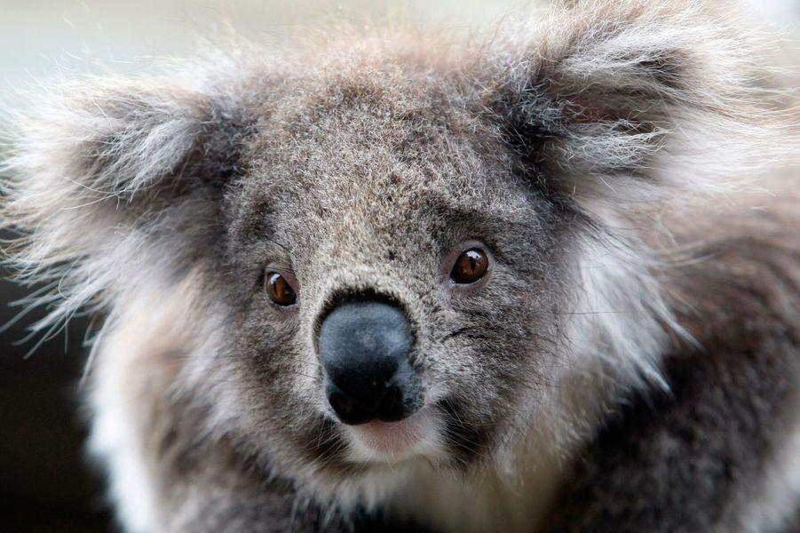 Melbourne abrite une faune et une flore très riches