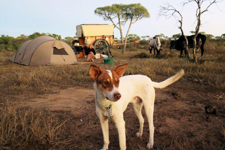 Mario veille sur le campement. Ce chien a emboîté le pas des Poussin 1000 kilomètres plus haut.
