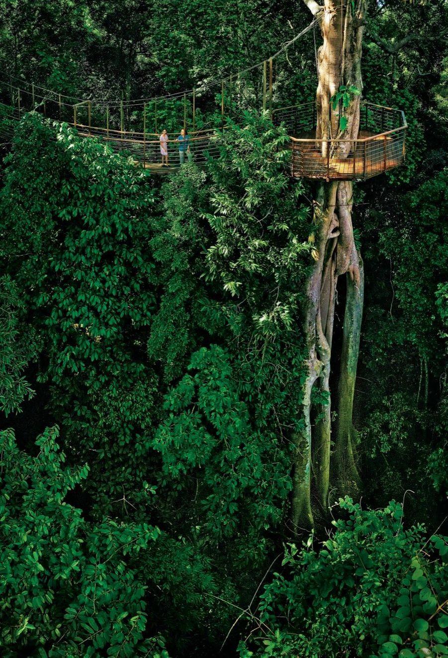 Le parcours s'effectue avec un naturaliste décrivant les richesses cachées dans cette végétation luxuriante