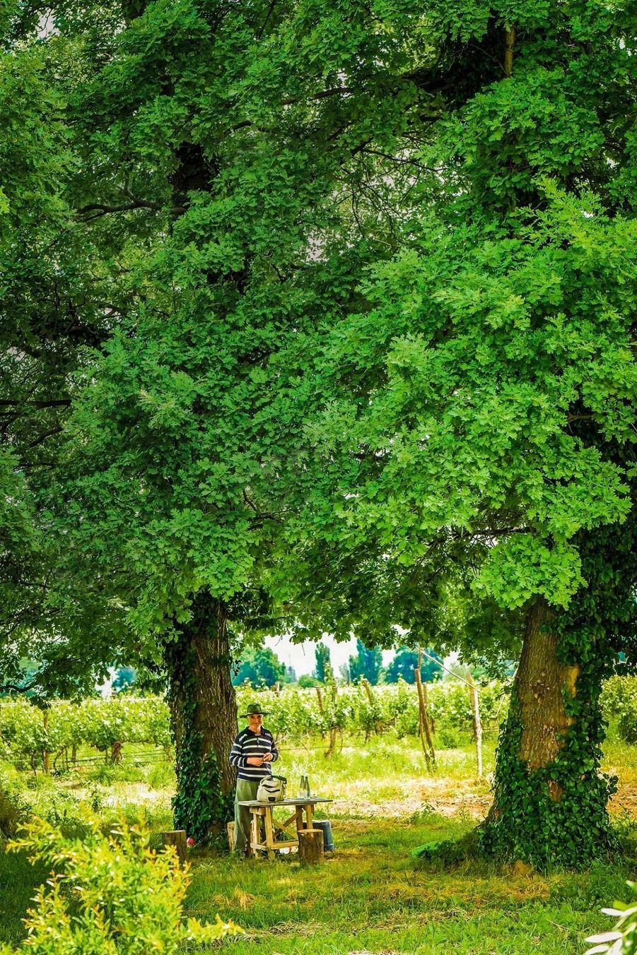 A 50 kilomètres de la capitale, le domaine du château Mukhrani, où l'on fabrique le vin comme il y a plusieurs milliers d'années.