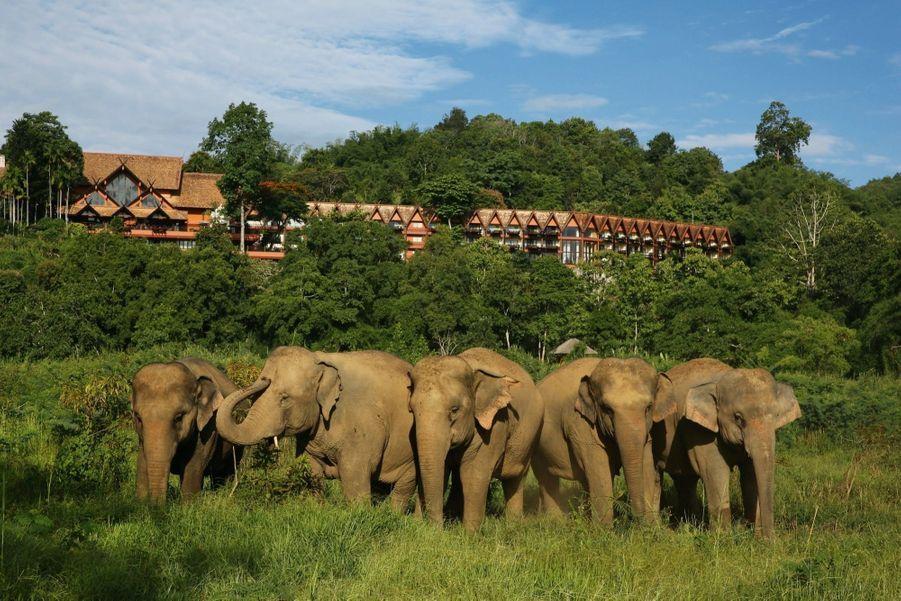 La jungle où sont dispersés les éléphants du camp à la saison sèche.